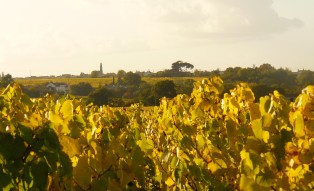 le vignoble de la Févrie